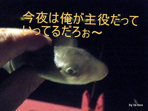 20100703サメ2