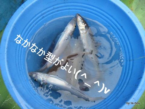 20100710キス釣り1