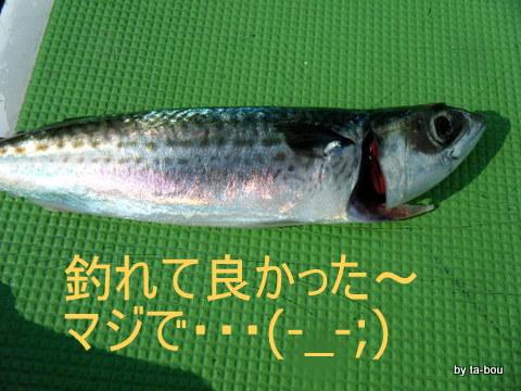20100725サバ