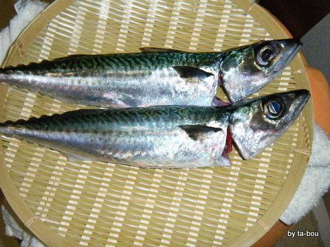 20100725釣果