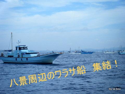 20100807ワラサ船団
