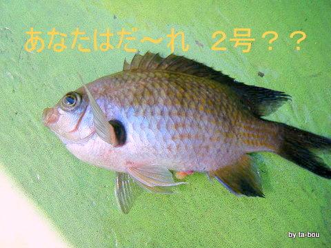 20100827誰2