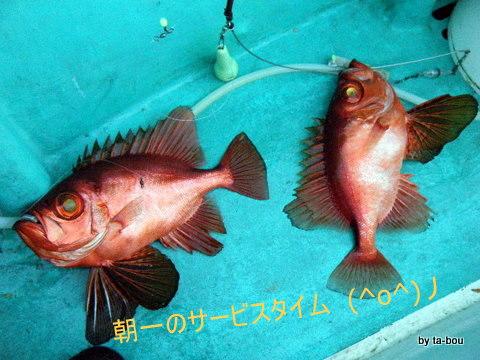 20101003キントキダブル