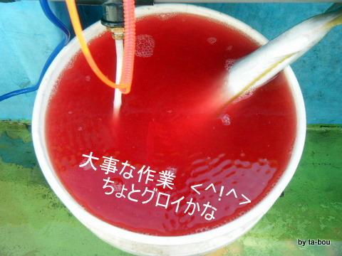 20101106血抜き