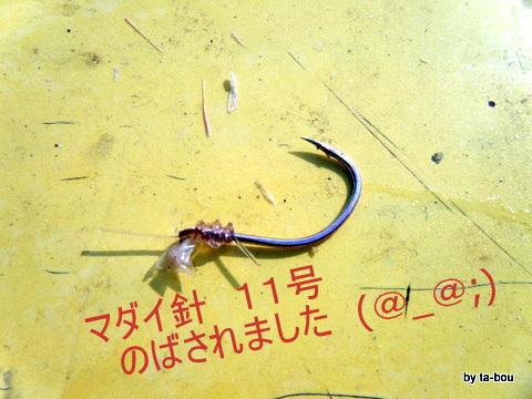 20101106マダイ針