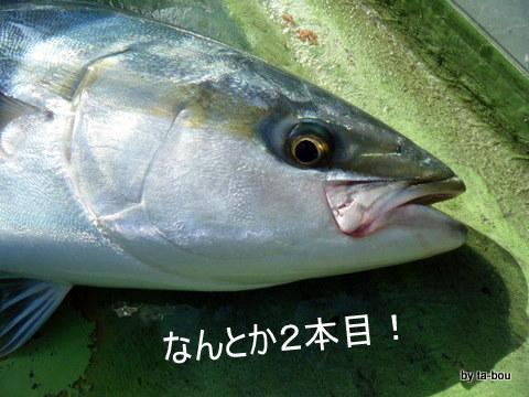 20101106ワラサ2本目