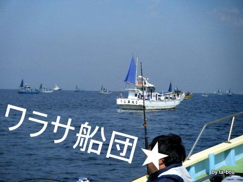 20101106ワラサ船団