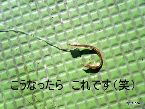 20101106青物針