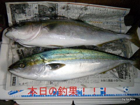 20101106釣果
