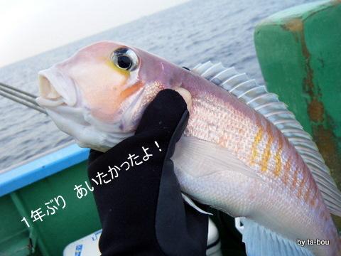 20101126アマダイ1