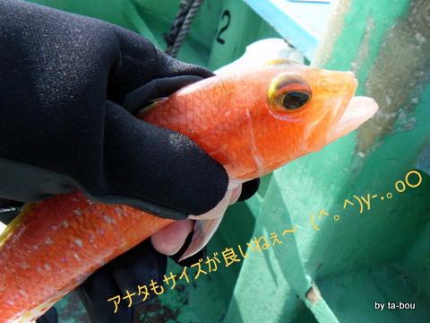 20101126ヒメコダイ1