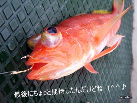 20101126ヒメコダイ2