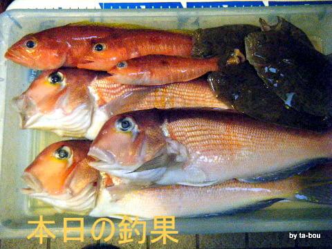 20101126本日の釣果