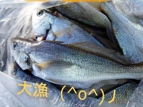 20111211本日の釣果