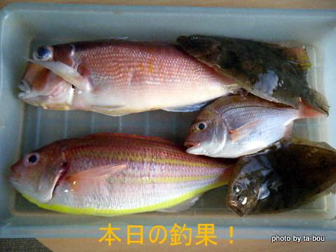 20101230本日の釣果