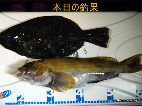 20110219本日の釣果