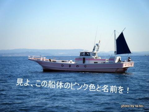 20110305ひまわり