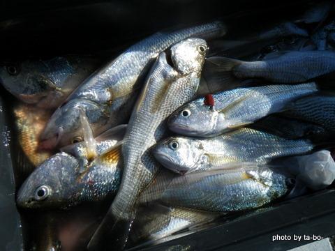 20110305本日の釣果