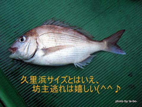 20110416マダイ1