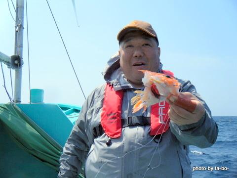 20110430サメに食われた魚