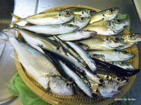 20110503本日の釣果
