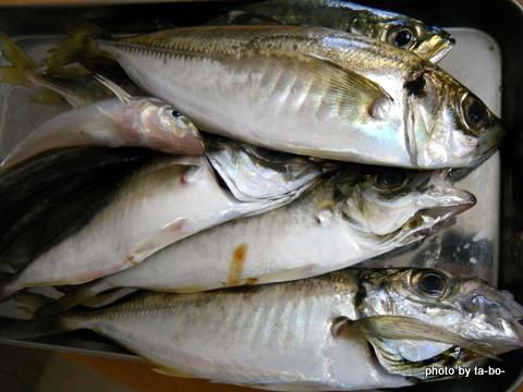 20110604本日の釣果
