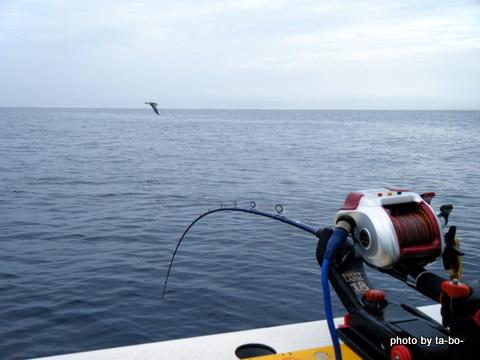 20110730凪の海