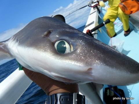 20110923サメ2