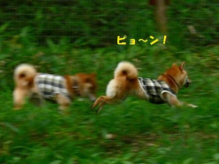 ウサギのように!
