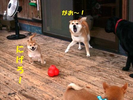 にげろ~!