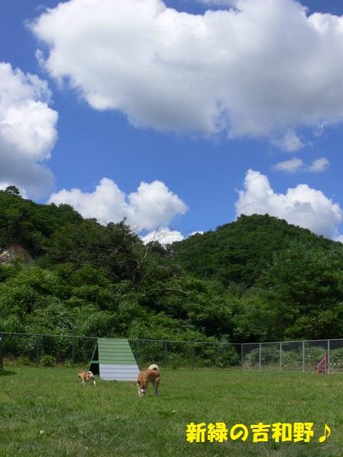 新緑の吉和野