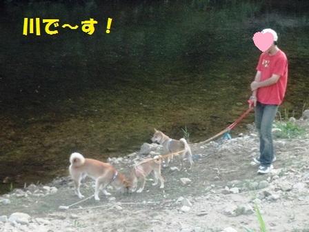 川に・・・!