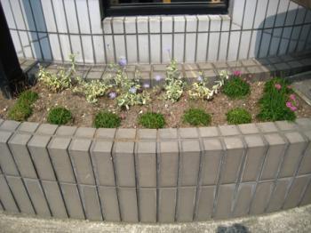数ヶ月前の花壇