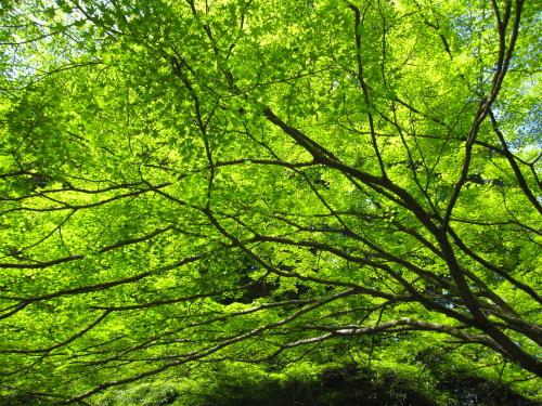 2011_05_18_03.jpg
