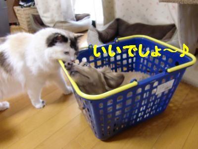 CIMG0079_convert_20110818210840.jpg