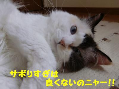 CIMG0114_convert_20110913120659_20110913143611.jpg