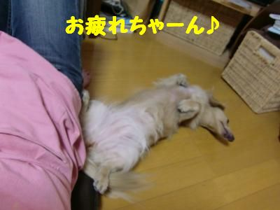 CIMG0193_convert_20110915132048.jpg