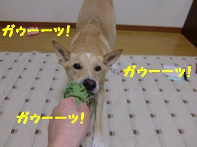 CIMG0375_convert_20110921111029.jpg