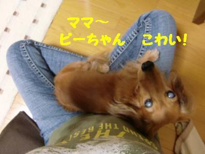 CIMG0422_convert_20110923105220.jpg