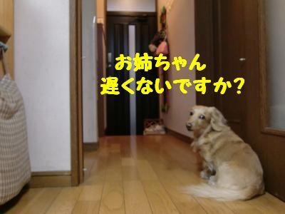 CIMG0973_convert_20110517144013.jpg