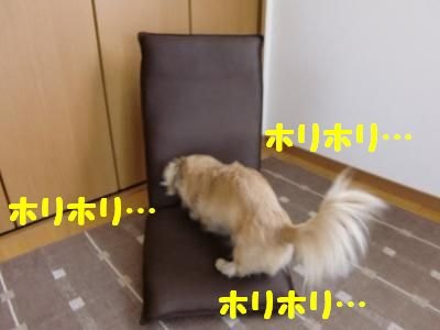 CIMG1597_convert_20110606112140_20110606133610.jpg