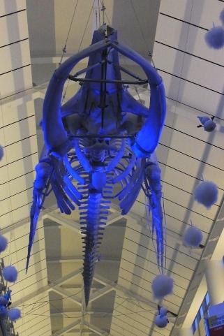 クジラの骨格標本のライトアップ