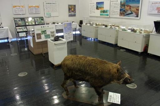 移動博物館