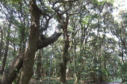 飯島八幡神社の樹そう