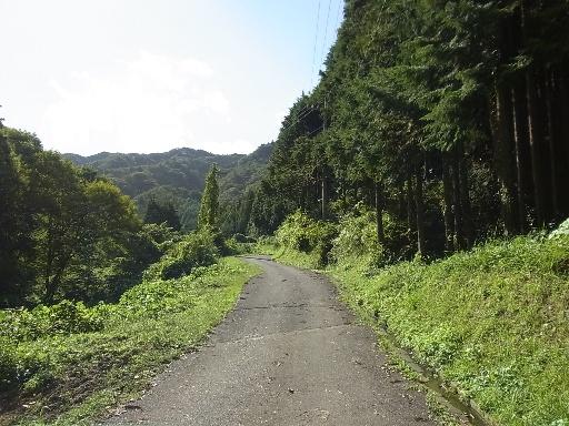 鉱泉への林道
