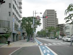 keyaki2011.jpg
