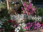 アウトレット内の花畑