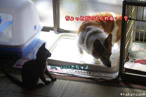 001_20091008130059.jpg