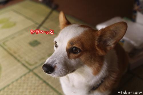 002_20090923095531.jpg
