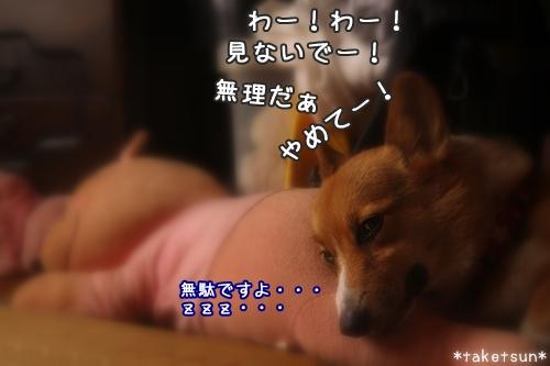 002_20090928114143.jpg